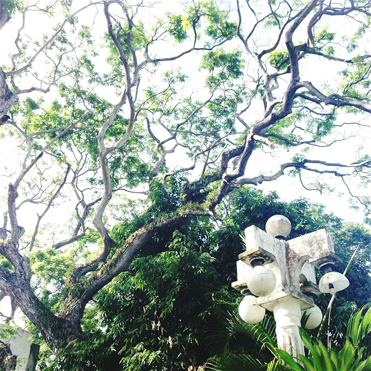 tree, human representation, branch, day, growth, no people, sculpture, statue, nature, outdoors, low angle view, childhood, close-up