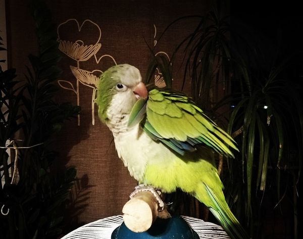 Bird Green Color Animal Themes Animal Parrot Cotorra