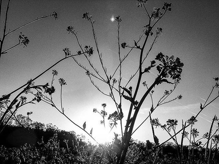 🆕📷✴🔱🌏🌍 Blackandwhite Bnw Bw Biancoenero BuonaNotte Goodnight Pisa Italia Toscana Roma Milano Livorno Ig_italia Ig_pisa Igerspisa Vivopisa Volgopisa Igersitalia Igerstoscana Ig_italy Ig_europe Ig_roma Genova Igersgermany Igersmilano nature natureza sunset tramonto