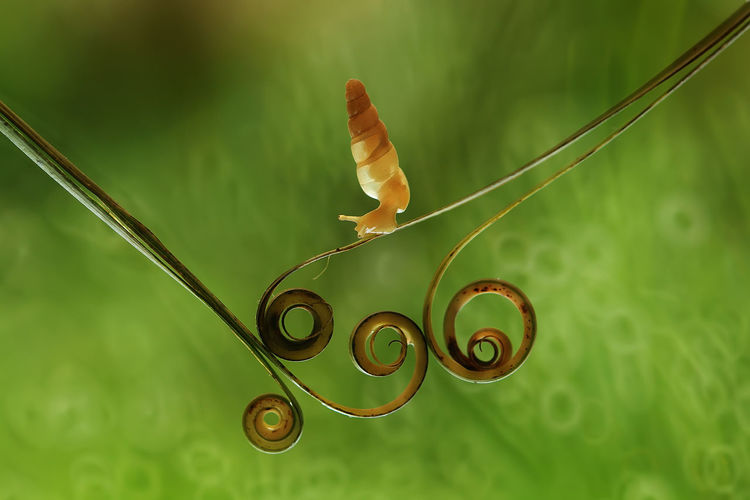 Close-up of snail on tendrils