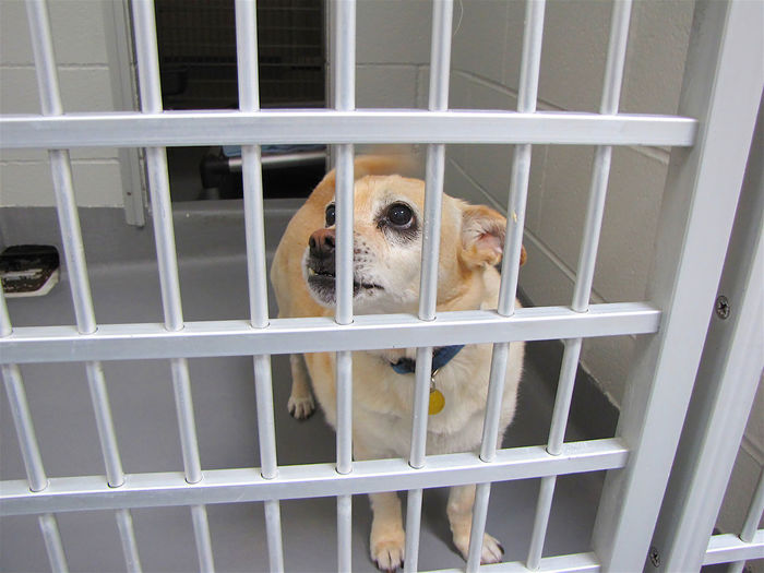 Small Dog Kennel Sad Eyes One Animal Animal Themes Canine Dog Domestic Mammal Pets Animal Domestic Animals Cage No People Window Vertebrate Metal Animals In Captivity Indoors  Security Portrait Day Protection Animal Head