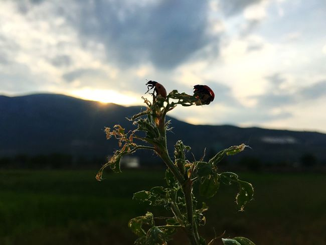 Sunset Mountain Contrast Ladybugs Nature Tramonto Montagna Coccinelle Contrasti Luce Natura