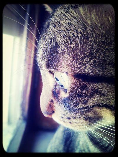 Focus... Cat Lovers Eyem Animal Lovers Animal Portrait Details