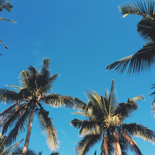 Coconut Summer Nature Random