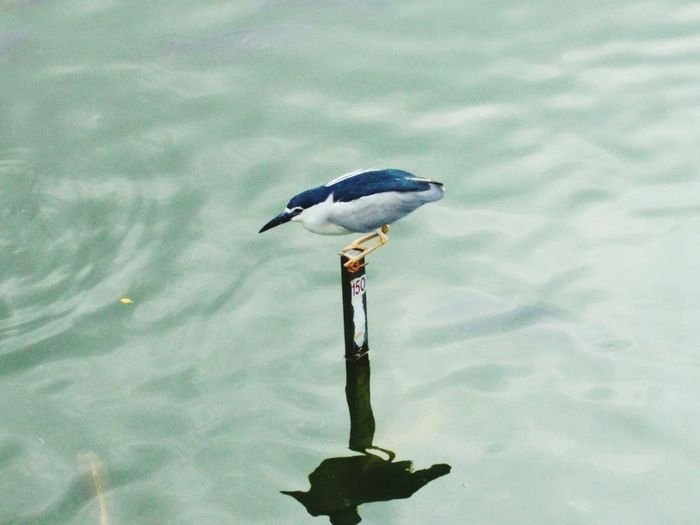 Birds On Water Bird Bird Watching Bird Hunting