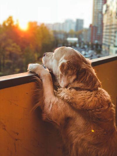 Animal EyeEmNewHere Autumn colors Mammal Vertebrate Domestic Animals No People Dog Focus On Foreground Animal Head
