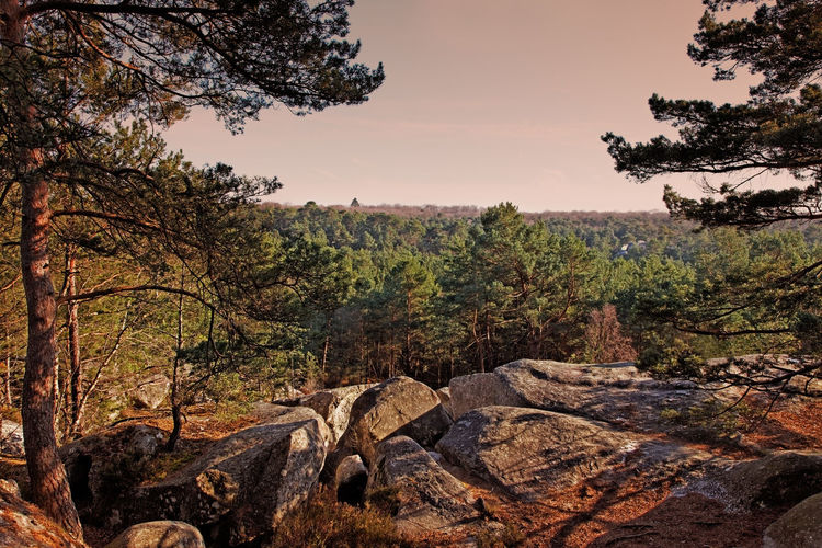 Sunset in the forest of Fontainebleau in the early spring.This French forest is a national natural park wellknown for its boulders with various sahpes and dimensions. It is the biggest and most developed bouldering (a specific style of rock climbing) area in the world. Tree Plant Rock Beauty In Nature Tranquil Scene Rock - Object Scenics - Nature No People Forest Non-urban Scene Environment Land Branch Outdoors Fontainebleau Fontainebleau Forest Background Nature Nature_collection