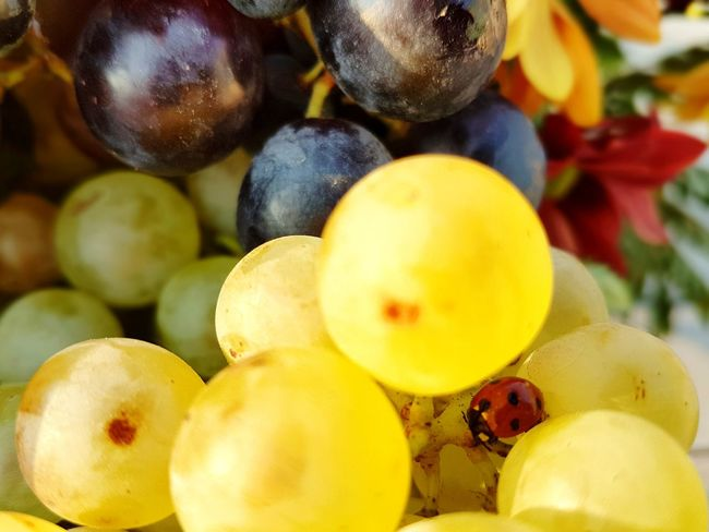 Fruit Food Healthy Eating Close-up Freshness Fruits The Week On EyeEm Insect Ladybug White Grapes Green Grapes Grapes Outdoors Nature Beauty In Nature Black Grapes Paint The Town Yellow