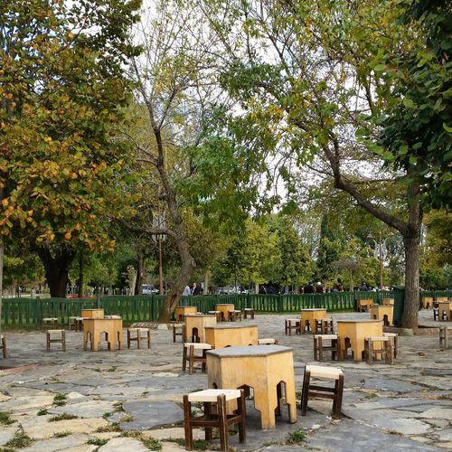 Florya Istanbul Turkey Autumn Colors Autumn