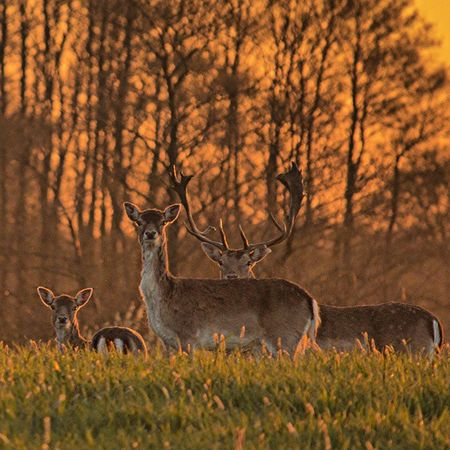 Damwild Deer Deutschland Reh roe fallow Field f4f awsome can_promo dslr canonoftheday tier tree animal beautiful Canon europe Germany hay igersschwerin landscape l4l nofilter northgermany photography photooftheday spring tree view TPS1Millionthephotosociety