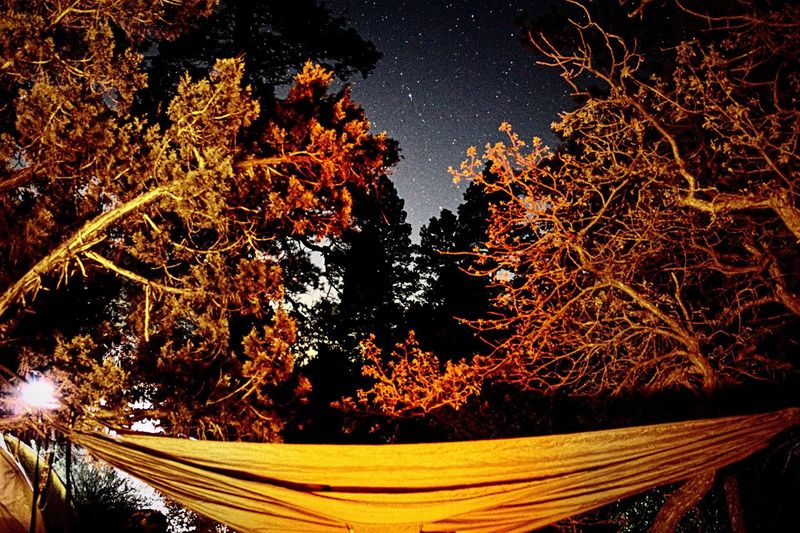 Beauty In Nature Bryce Canyon Bryce Canyon National Park No People Tree Nature Stars Dreaming Hammock Pine Tree Nps Utah BRYCE UTAH Utah Beauty Starry Night Night Astronomy Star - Space Backbacking Nature Nights Sommergefühle