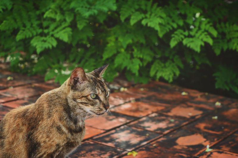 Cat looking away outdoors