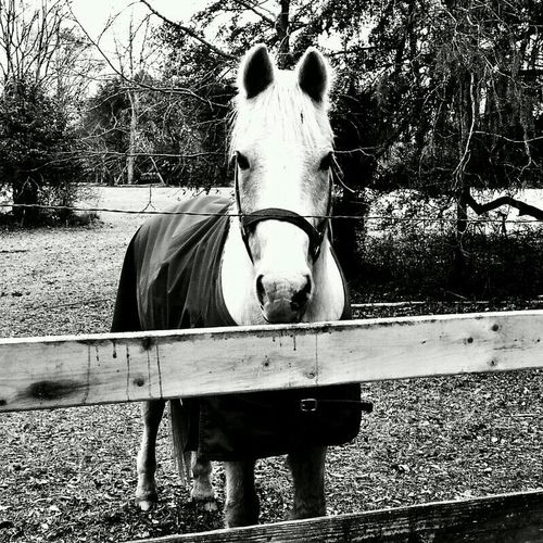 Blackandwhite Horse From The Car Window