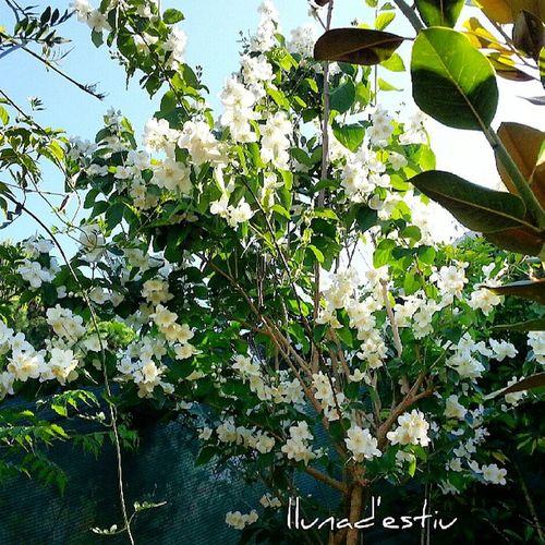 Bon dia! A la fresca en Elmeujardi Casameua Lloretdemar Igersgirona incostabrava catalunyafotos catalunyaexperiencie descobreixcatalunya fotosdesomni fotodeldia gf_spain gf_daily chiringuilla flors flowers natura