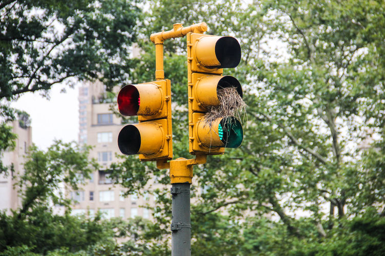 Bird nest on a traffic light Birdhouse Blue Close-up Day Focus On Foreground Green Color Growth Low Angle View Multi Colored Nature Nest No People Outdoors Pole Sky Traffic Lights Tree Tree Trunk Yellow