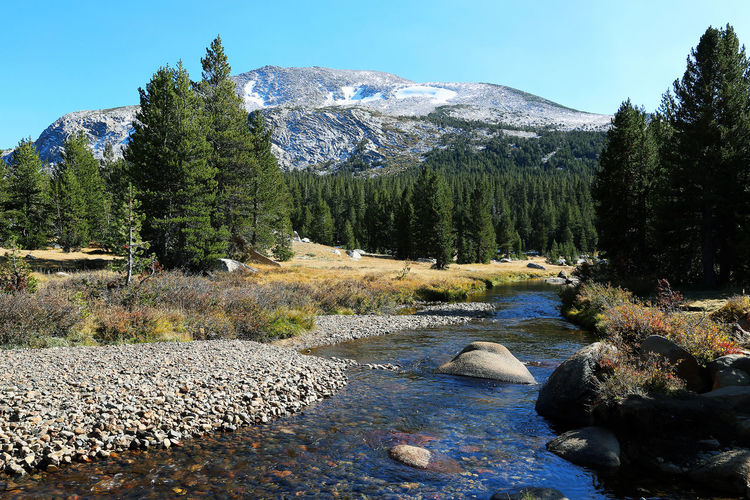 USA Yosemite Beauty In Nature Day Environment Flowing Water Forest Growth Mountain Nature No People Non-urban Scene Outdoors Plant River Rock Scenics - Nature Sky Snowcapped Mountain Solid Stream - Flowing Water Tranquil Scene Tranquility Tree Water