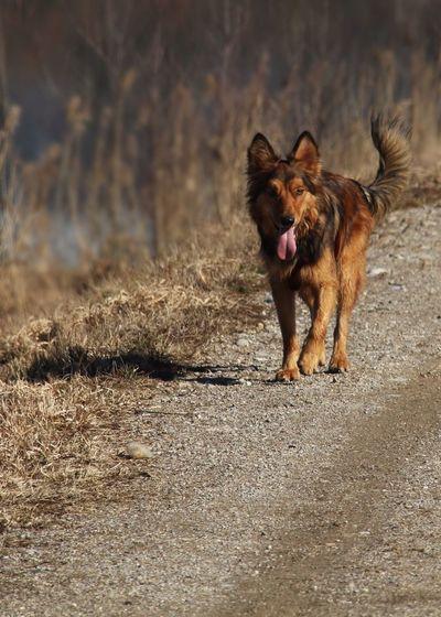 Logo Harzer Fuchs Hund Animal Mammal One Animal Animal Themes Canine Dog Pets My Best Photo