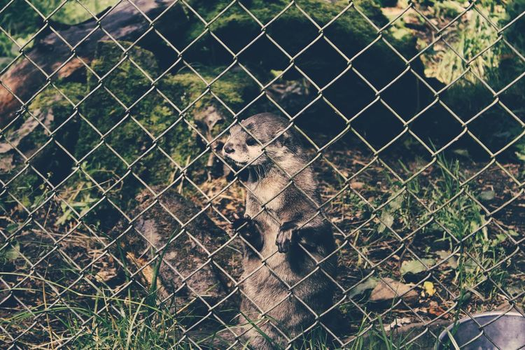 Animal Themes Chainlink Fence Fence Focus On Foreground Full Frame Mammal Metal No People One Animal Protection Safety Security