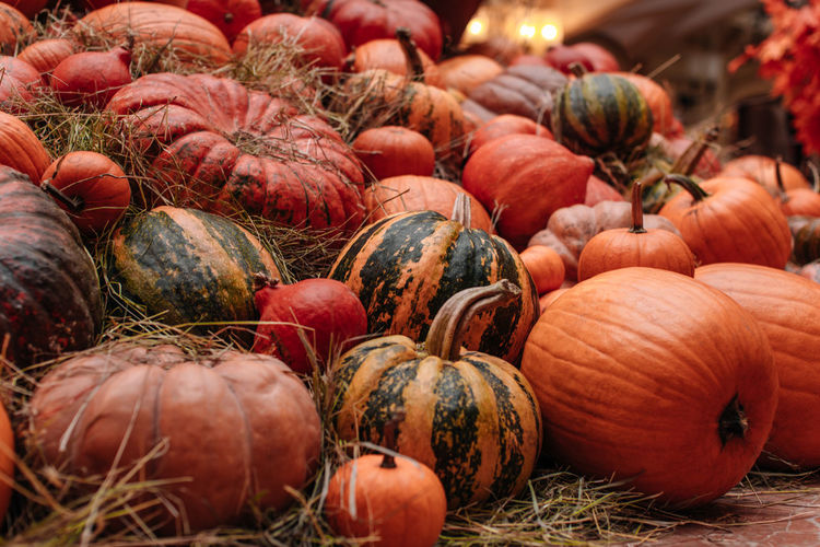 Orange pumpkins in the hay. autumn decoration. the time of harvest. halloween and thanksgiving.