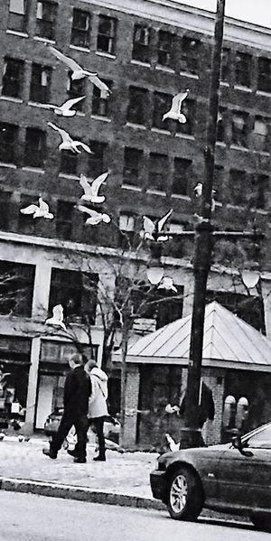 Uptown ~ Black And White Seagulls My Point Of View My City Loving The Landscape In Portland Maine USA Happy Moment Enjoying Life Architecture Building Exterior Street City Transportation Real People Men Built Structure People Full Length Day Road Adult Walking Women Mode Of Transportation Lifestyles Outdoors