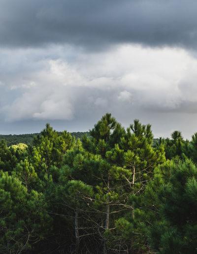 forest Cloud -
