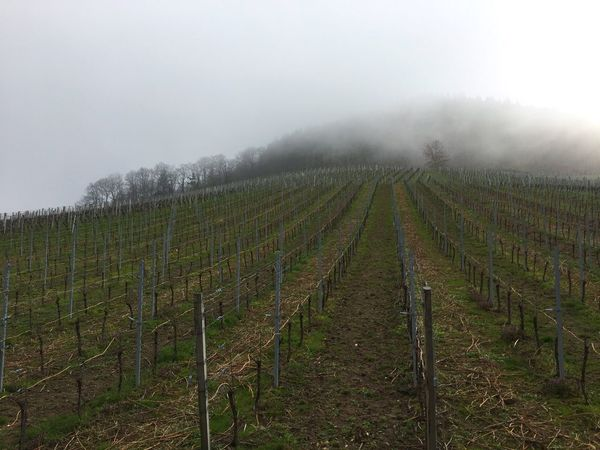 Foggy Rebstock Wine Black Forest Nature Photography Nature Mountain