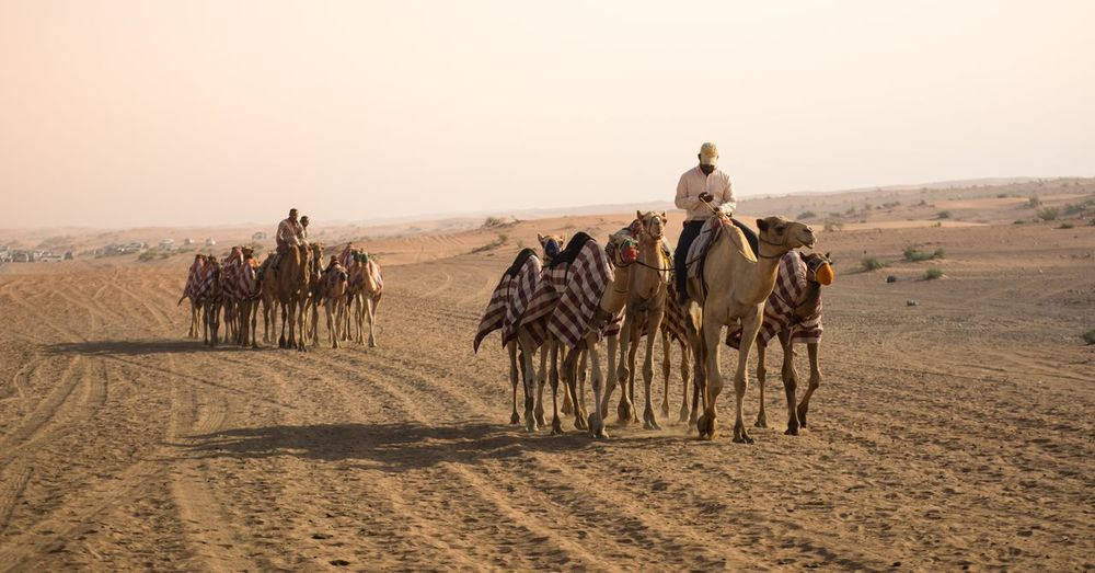 People riding camels on desert against sky
