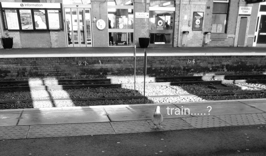 Tiny train goer