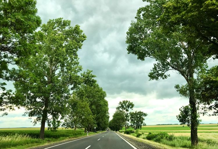 Tree Road The Way Forward Transportation Sky Day Cloud - Sky Nature Growth Tranquility No People Outdoors Green Color Landscape Scenics Beauty In Nature