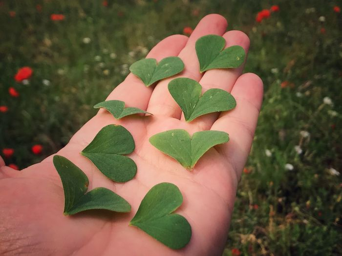 For you 💚... Human Hand Human Body Part Close-up Leaf One Person Human Finger High Angle View Real People Green Color Heart Clover Leaf Heart ❤ Heart Shape Romanticism Love Romantic Conceptual Concept Clover Ecology Ecological Environment Fragility Nature Outdoors Love Yourself
