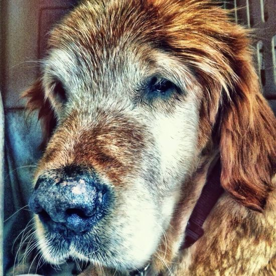 Old Dogs Rule