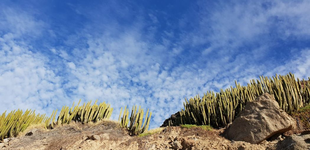 Plants growing on land against blue sky