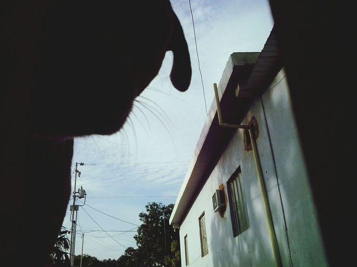 Urban Dog Lucy♡