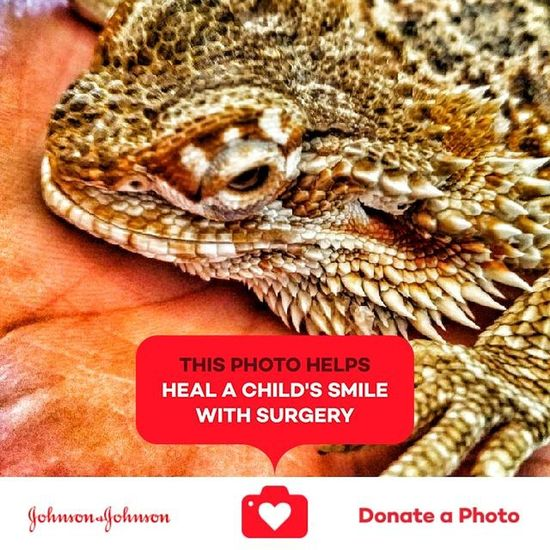 Special effects on a lizard close up of its face Close-up No People Day Jonhson And Johnson Donation Collection Donated To Johnson And Johnson Collection Of Special Effects Photographs Special Effects Collection Johnson And Johnson Donate A Photo Lizard Reptile Lizard Eye