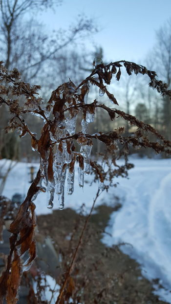 It's Cold Outside Mainephotography Yardpic Ice Drops Frozen Nature Leaves In Ice Nature_collection Nature Photography Eyeemnaturelover