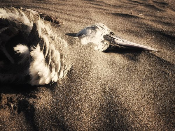 Let me sleep in the sands of time Sand High Angle View Land Beach Nature Sunlight No People