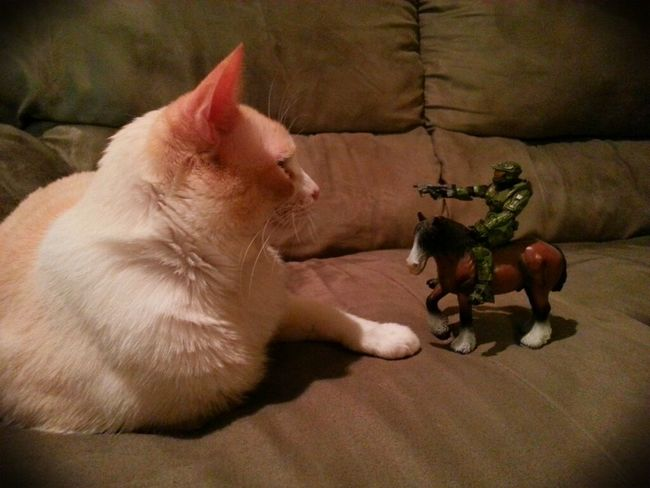 Cat Halo Funny