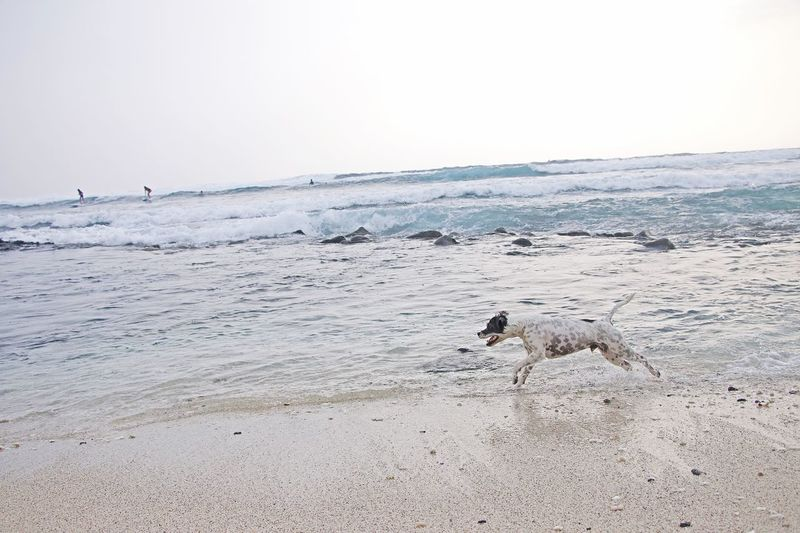 Wanderlust Travel Crashing Waves  Dog Love Sea Land Beach Water Sky Nature Clear Sky Animal Animal Wildlife Animal Themes Sand Scenics - Nature Beauty In Nature Non-urban Scene No People Copy Space