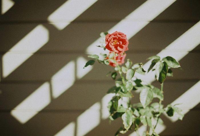 Eyemphotography Japan Film 35mm Film Filmphotography Camera EyeEm Nature Lover Flower