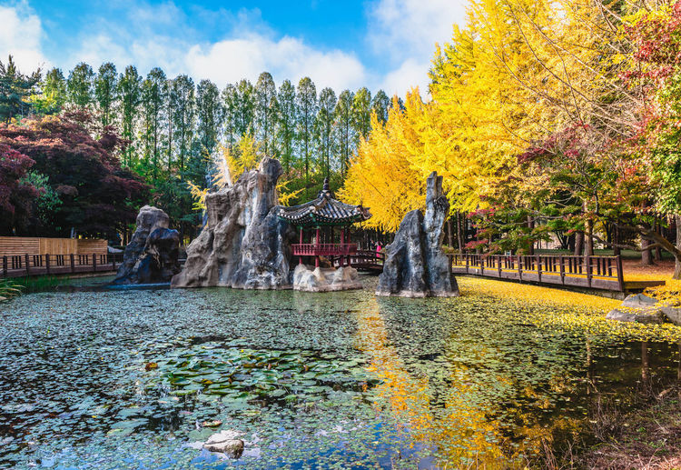 Beautiful autumn scenery around Nami Island, South Korea Architecture Autumn Beauty In Nature Building Building Exterior Built Structure Change Day Flowing Flowing Water Fountain Growth Lake Motion Nature No People Outdoors Plant Sky Spraying Travel Destinations Tree Water