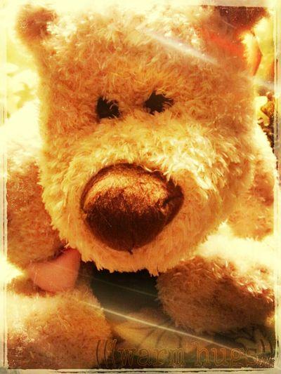 """Someone To Watch Over You"" #Chandler #AZ #Arizona #flurffy #WarmHugs It's So Fluffy, I'm Gonna Die Flurffy Warm Hugs Love First Eyeem Photo"
