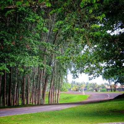 A quiet country lane, a place full of memories - trees of Mauritius 5/6 Igworldclub_team Igersmauritius Wu_europe Igersfrance World_specialist Igworldclub Globe_travel Rsa_nature Cs_reality Ic_wow Screaming_shots Allshots_ Clubofthephoto Stunning_shots Insta_ankara Igs_photos Beautiful_world Urm_feature Worldingram Ilovethisplace Worldunion Best_photogram
