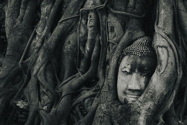 """Wat Mahathat"" Temple in Ayutthaya ,Thailand. Head Buddha Under The Rood Tree In Ayutthaya, Thailand วัดมหาธาตุ Buddha Statue Temple Wat Mahathat Ayutthaya Thailand เศียรพระในรากไม้"