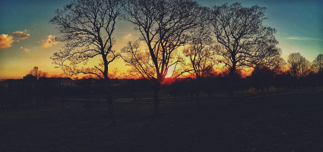 Sunset on Primrose Hill, London Sunset Tree Nature Orange Color Sun Silhouette Sky Beauty In Nature Outdoors Scenics London Primrose Hill Primrose Hill London Day Beauty In Nature Tree Cloud - Sky Dramatic Sky No People City