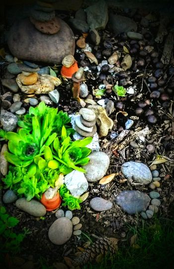 This is the beginning of a rock garden my grandchilren and Iworking on in my front yard. We are hand picking the rocks ,and theylove to make paws. Rock Garden Blayklee And I. My Collection Tyler Torn . Chickens And Hens Family❤ Family Project Tailored To You The OO Mission