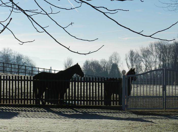 Animal Themes Boundary December Sun Fence No People Outdoors Paddock Sky Tree