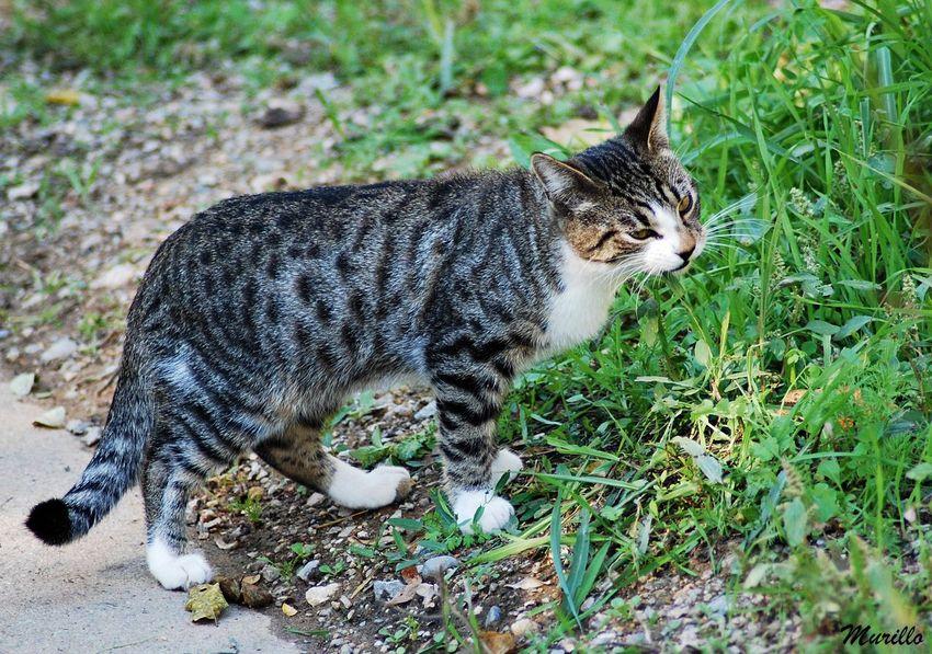 Feline Nature Gato Cat Gat NikonD60 Cat♡ Felinos Nikonphotography Feline Photography, Felino Gatos 😍 Catcatcat🐱🐈 Nikonespaña
