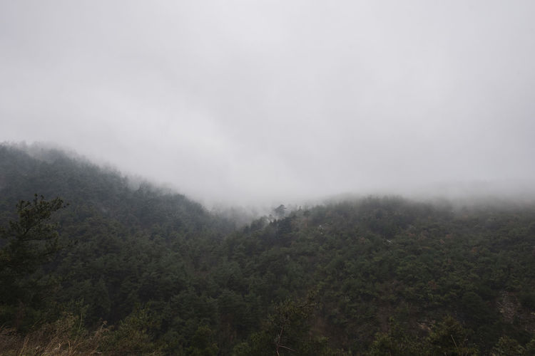 Tree Plant Fog Beauty In Nature Scenics - Nature Tranquil Scene Tranquility Landscape Environment Land Nature No People Forest Non-urban Scene Mountain Day Sky Outdoors Cloud - Sky WoodLand Rainforest