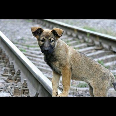 Встречи по пути щенок жд сырец Syrets puppy sunny