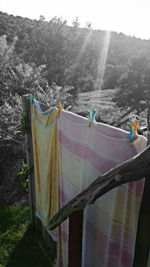 1st Color Pop. Sky Sun Rays Penetrating Colorful Colorsplash Cedar Rail Country Country Living